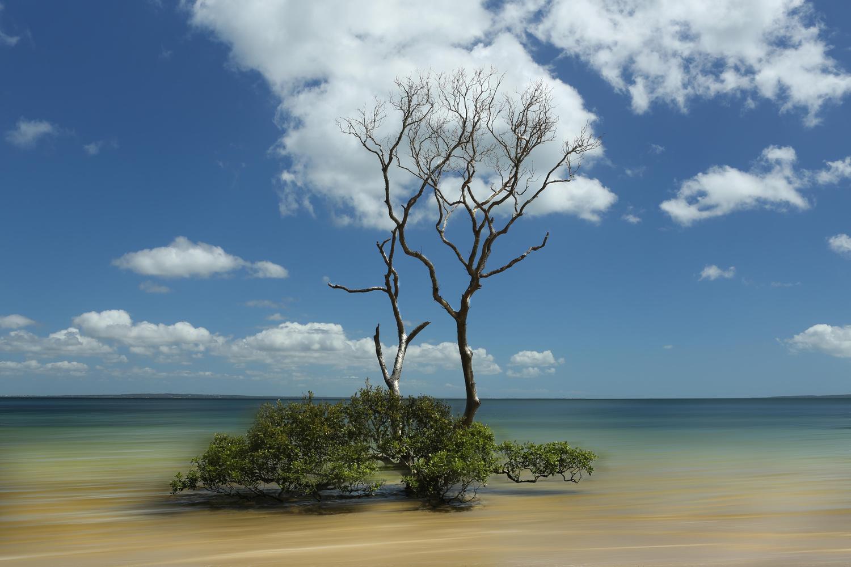 K' Gari tree by Bruce Pryde