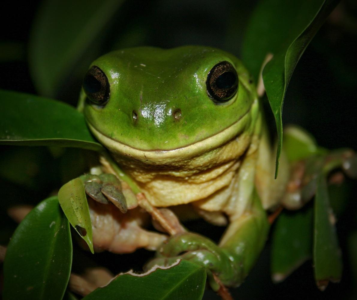 Frog Smile by Bruce Pryde