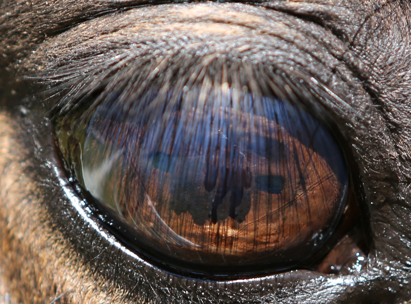 Equine View by Bruce Pryde