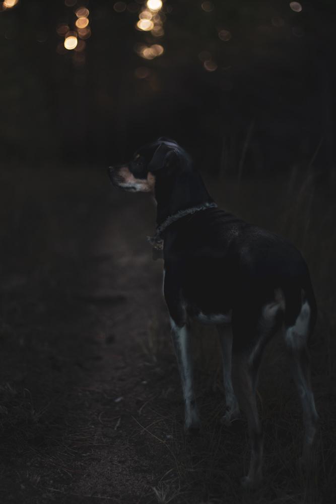 Dog at dawn by Paddy Hackett