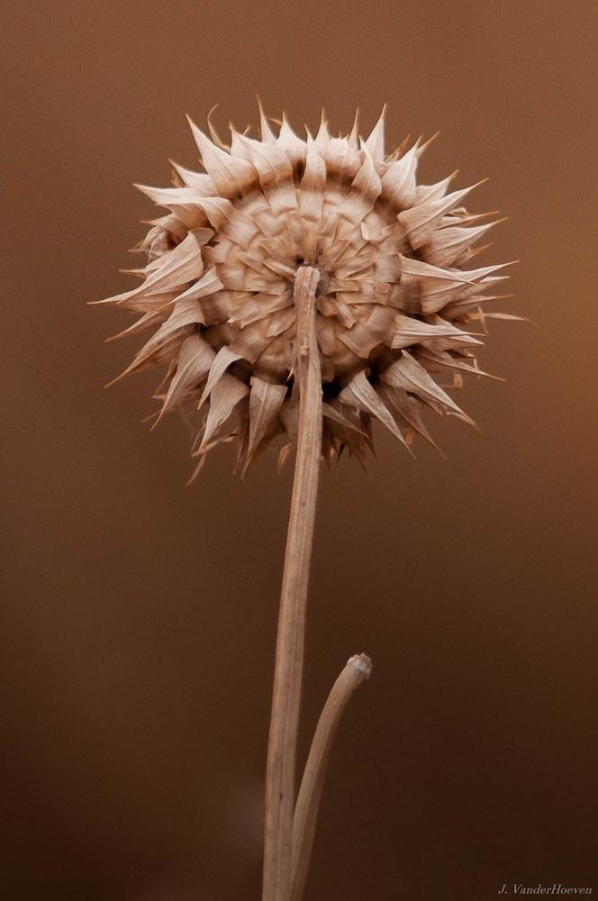 Winter Sunflower by Jake VanderHoeven