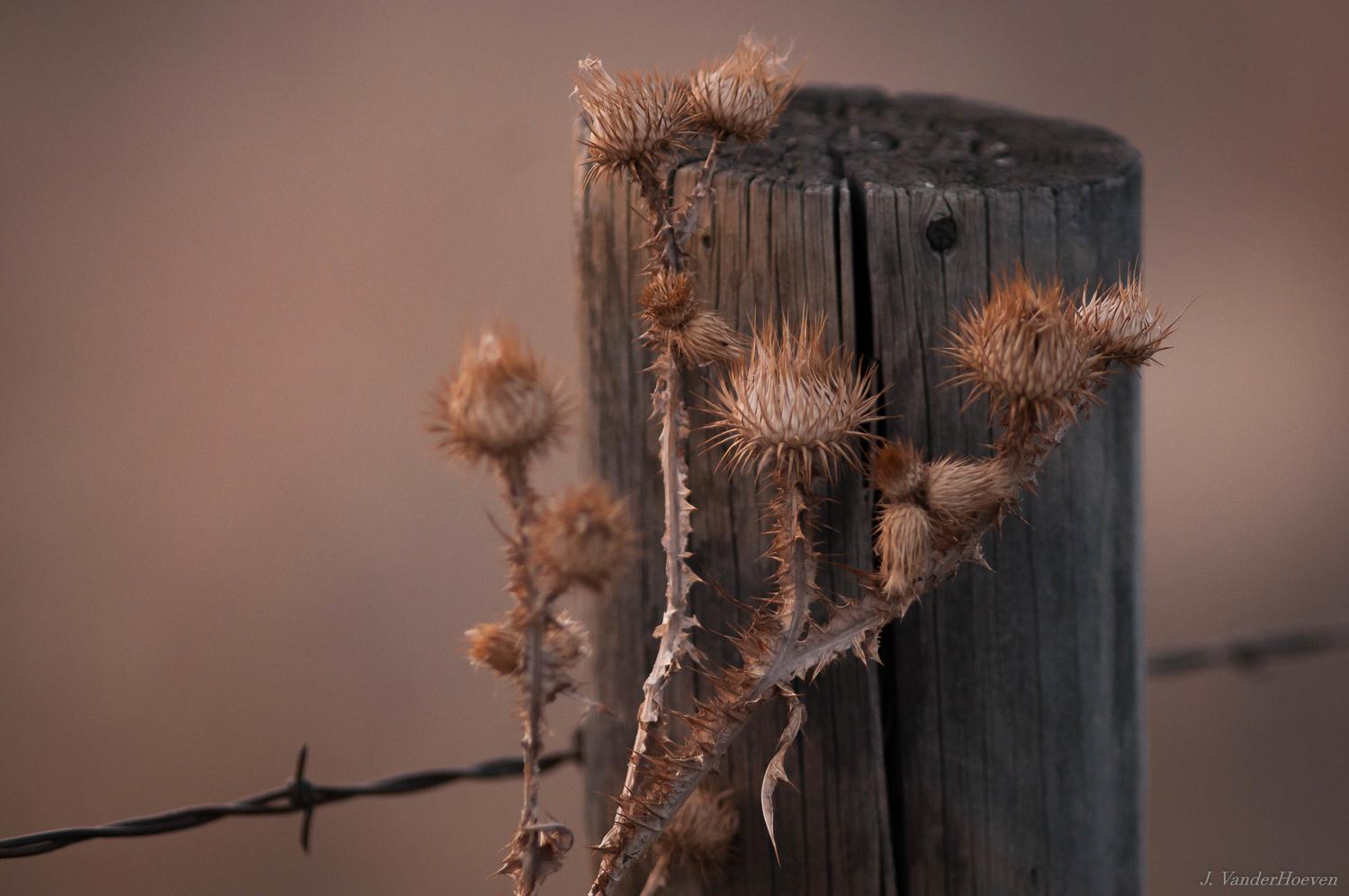 Along the Wire by Jake VanderHoeven