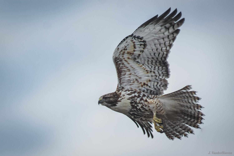 Ragged Tail Feathers by Jake VanderHoeven