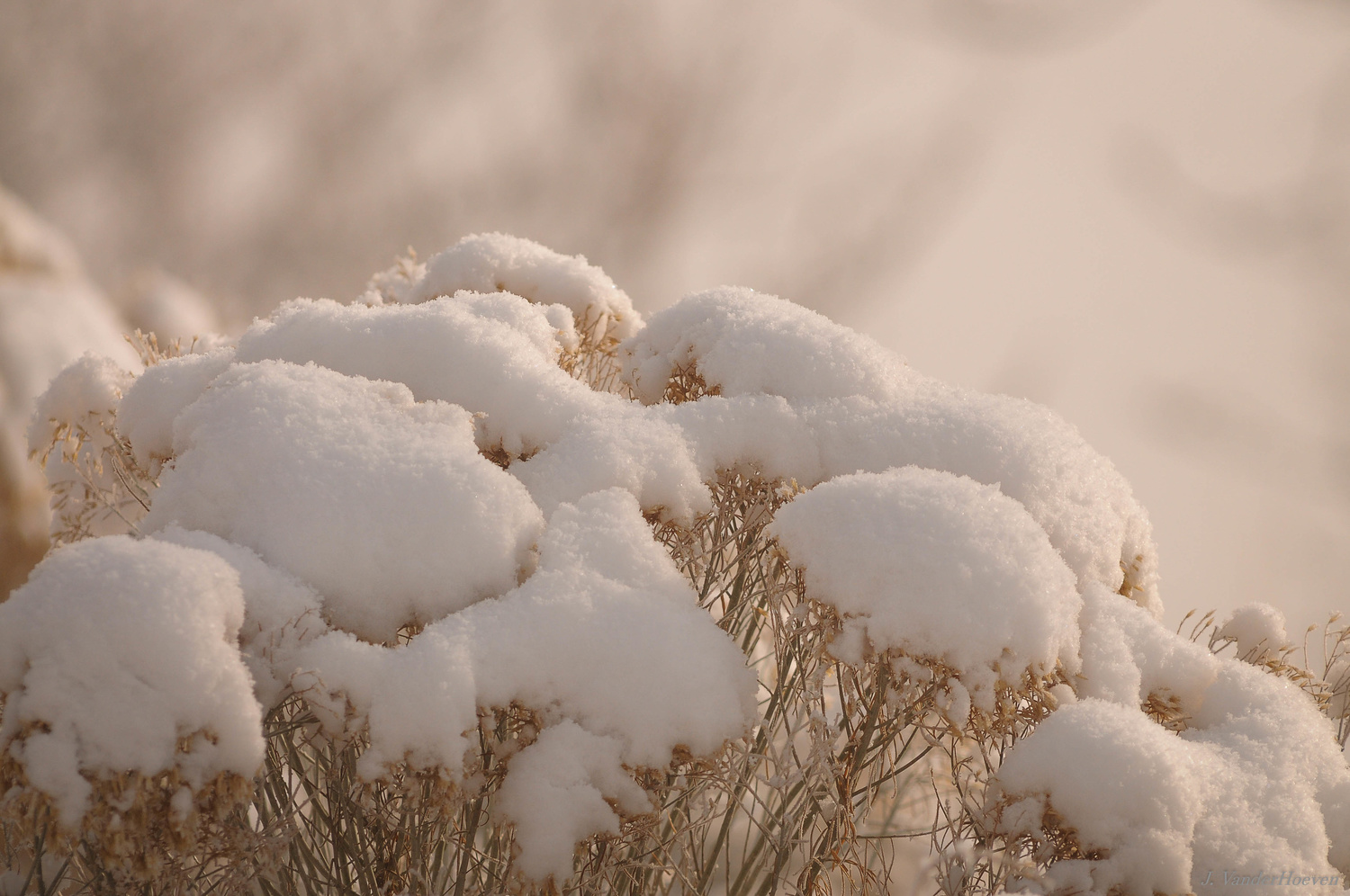 Snow on Sage by Jake VanderHoeven