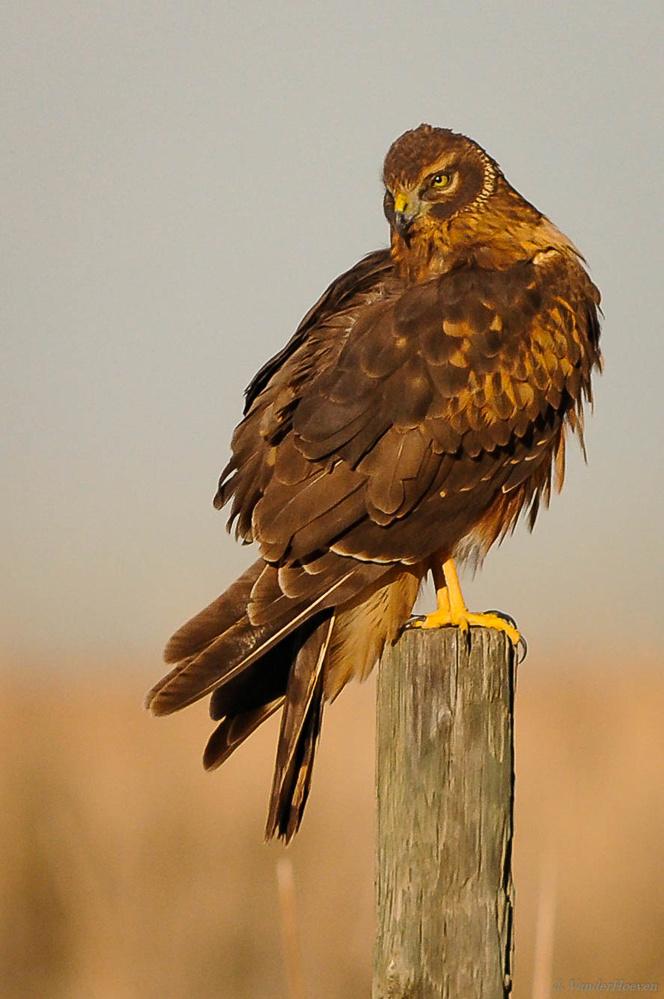 Feathers & Furry by Jake VanderHoeven
