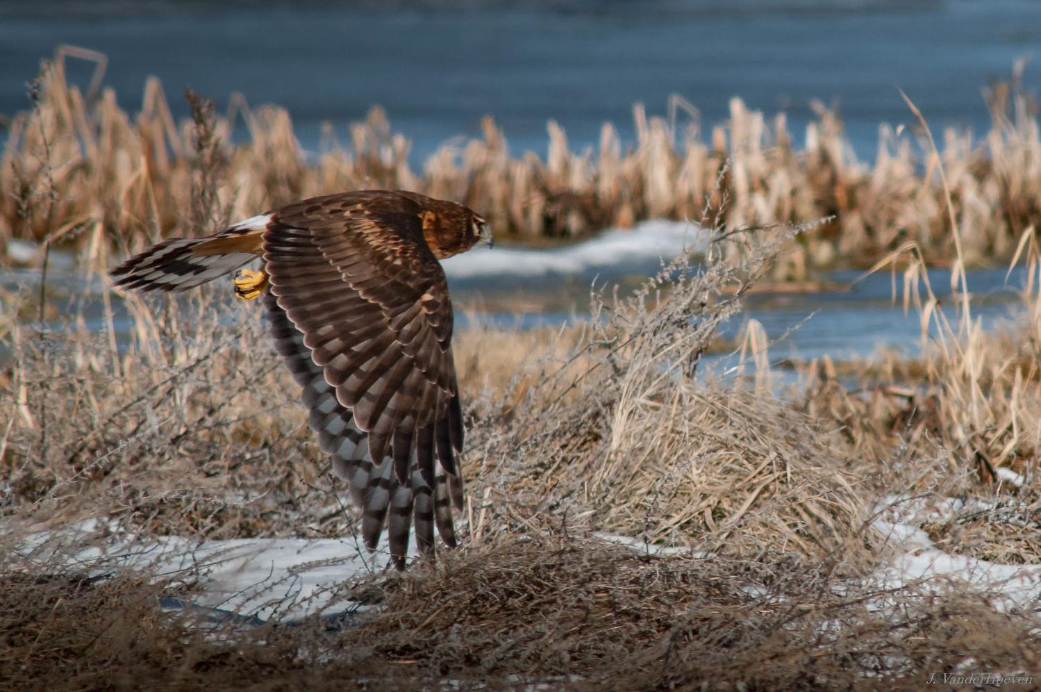 Scanning the Marshlands by Jake VanderHoeven