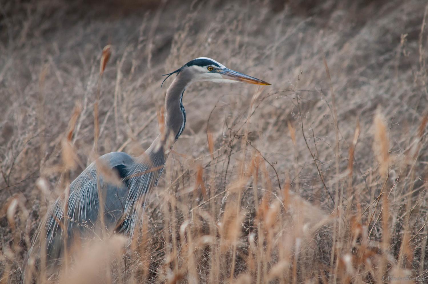 Blue in the Grass by Jake VanderHoeven