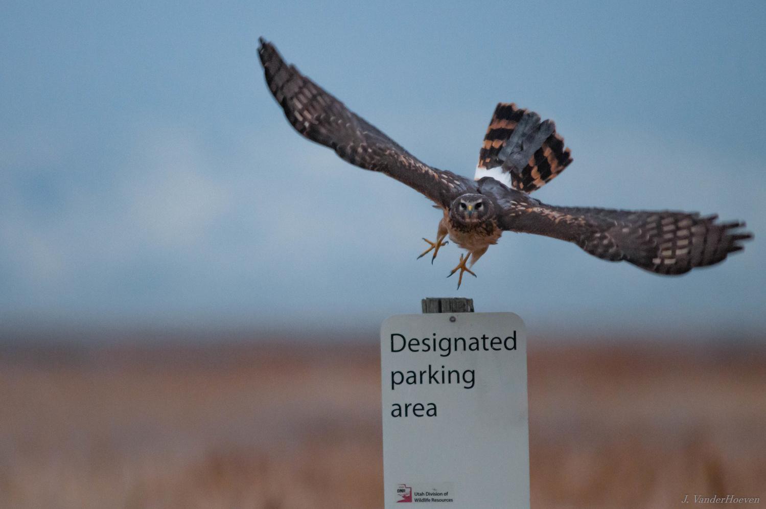 No Parking by Jake VanderHoeven