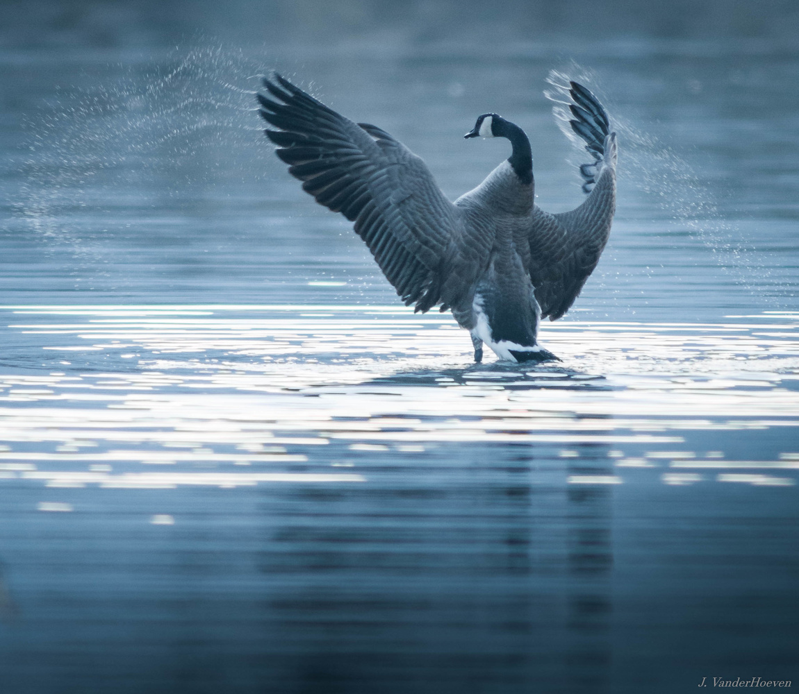 Greeting the Morning with a Bath by Jake VanderHoeven