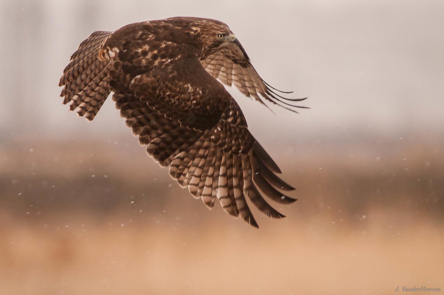 Flurries Flight by Jake VanderHoeven
