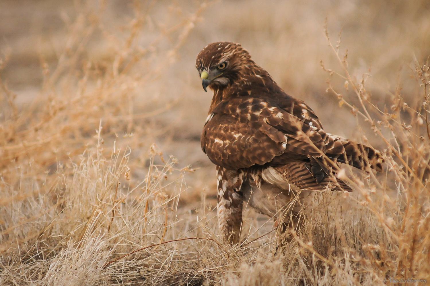 Hunting by Jake VanderHoeven