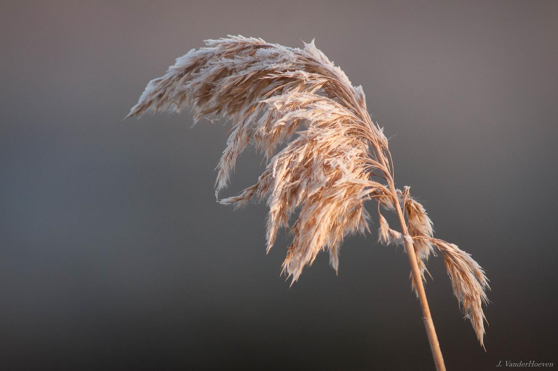 Morning Frost by Jake VanderHoeven