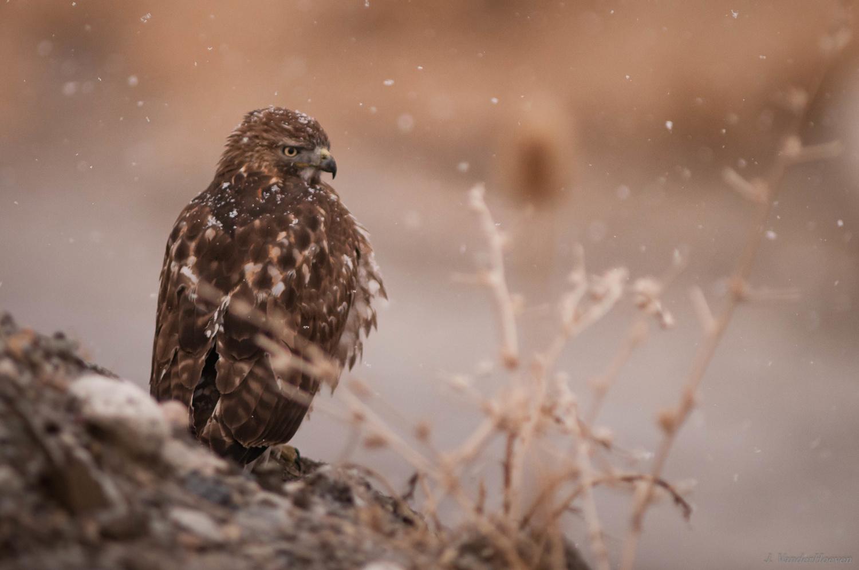 Snow Flakes by Jake VanderHoeven