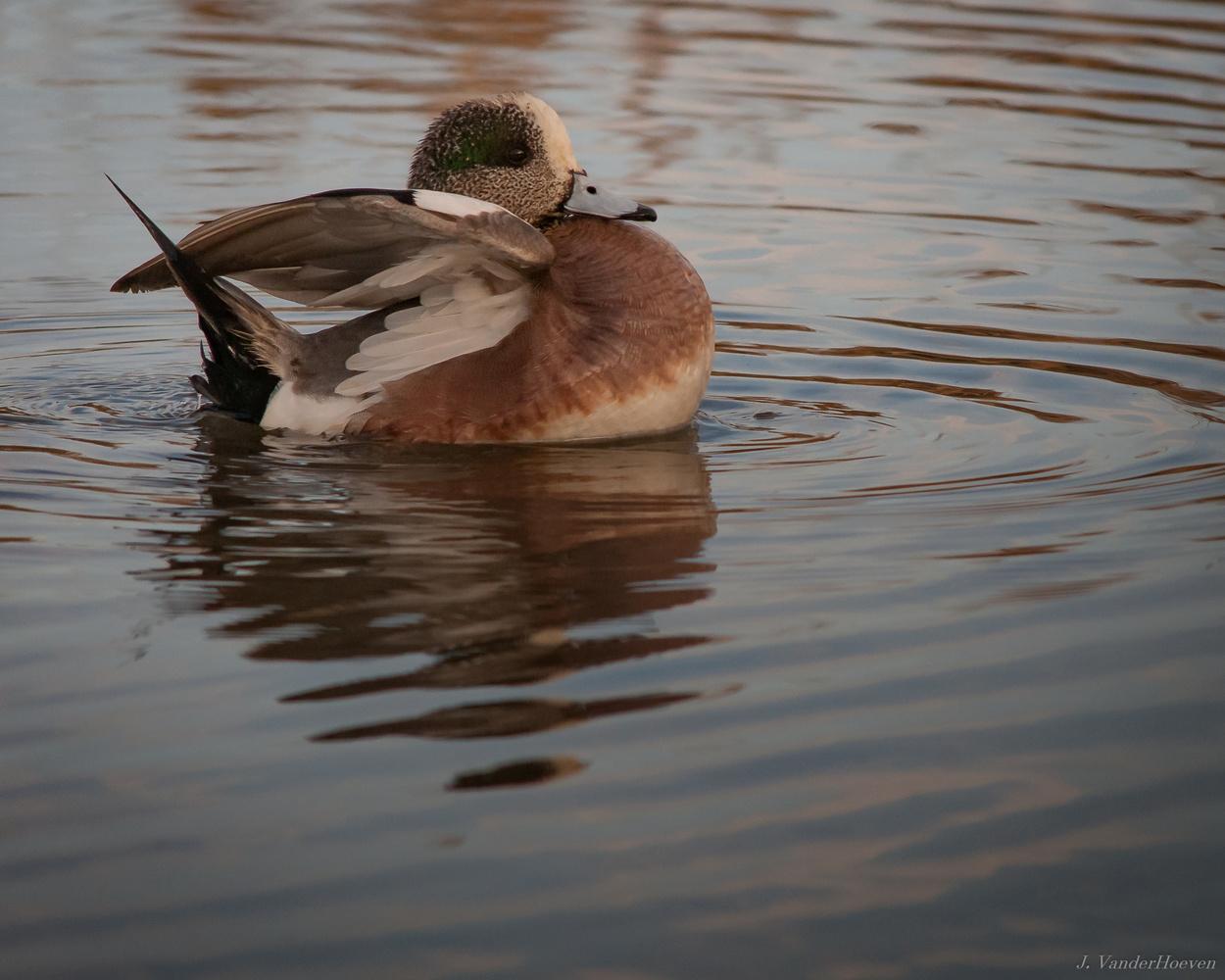 Ducks by Jake VanderHoeven