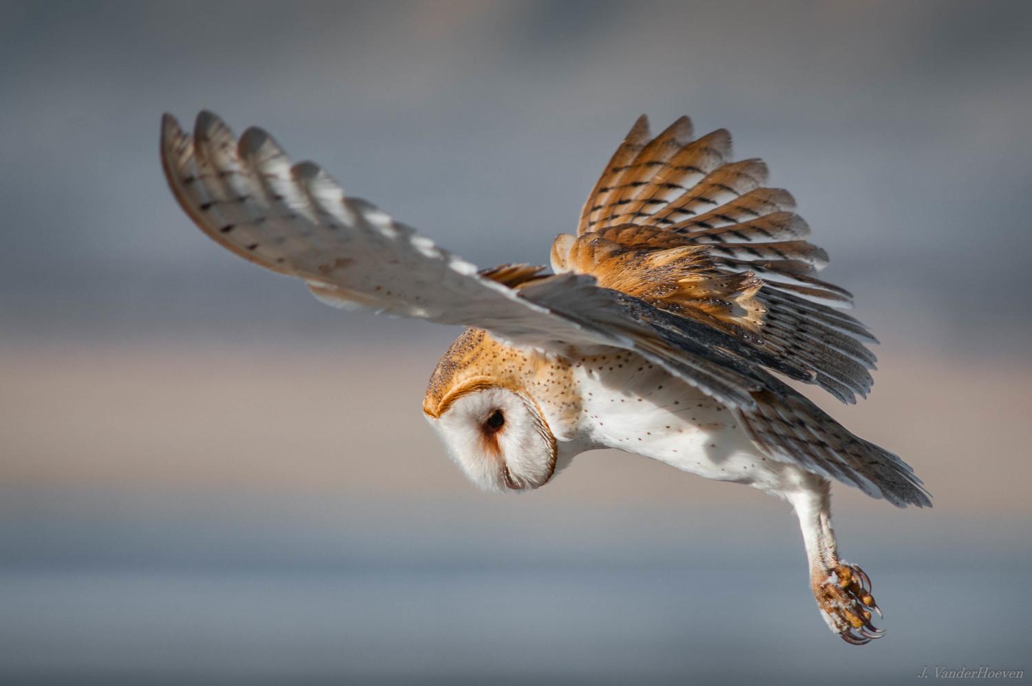 Hovering by Jake VanderHoeven