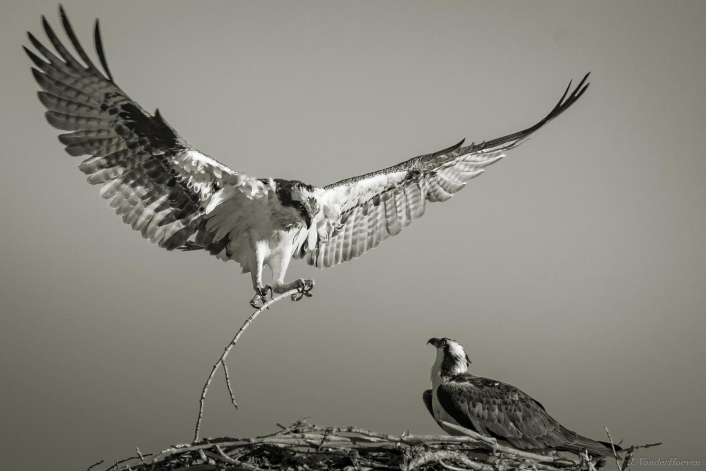 Nest Maintenance by Jake VanderHoeven