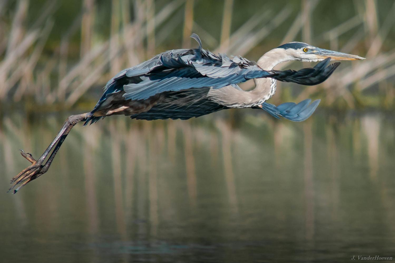 Beautiful  Glide by Jake VanderHoeven