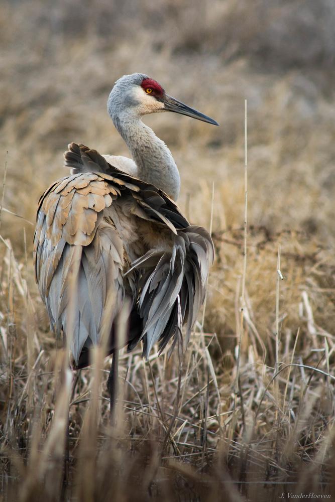Adjusting the Feathers by Jake VanderHoeven