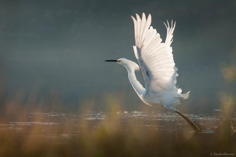 The Phoenix by Jake VanderHoeven