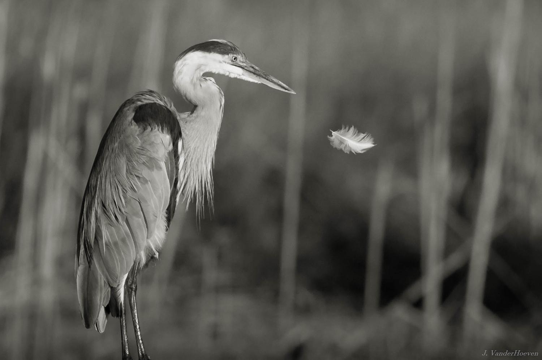 Feather by Jake VanderHoeven