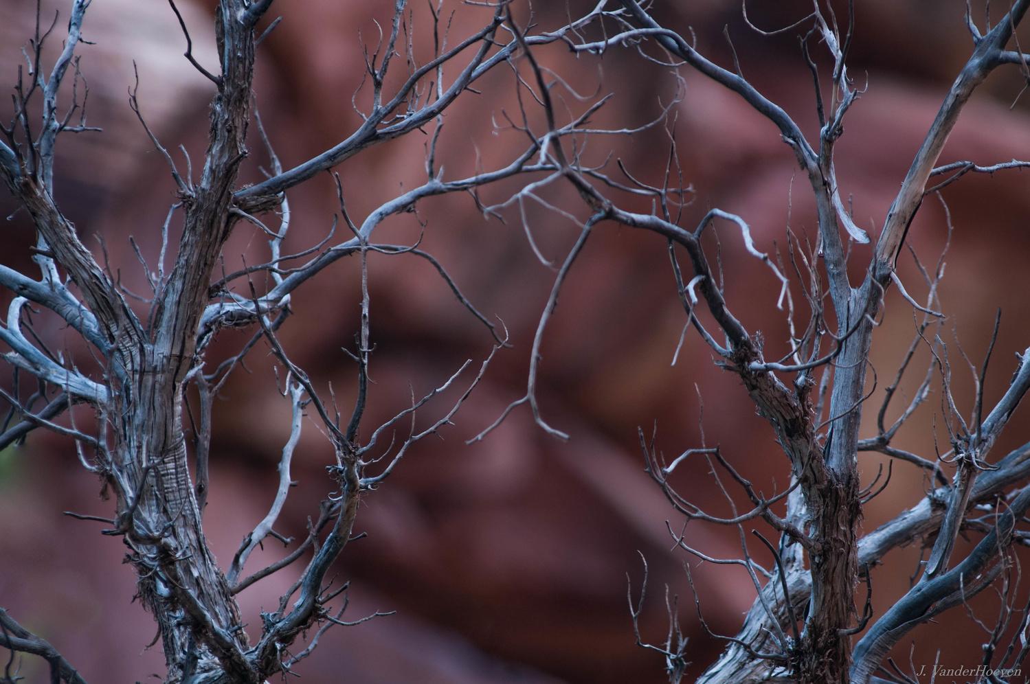 Veins by Jake VanderHoeven