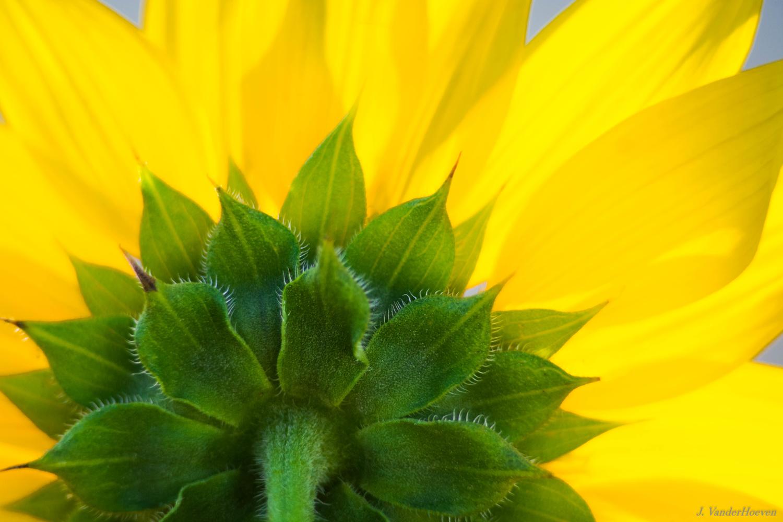 Flower by Jake VanderHoeven
