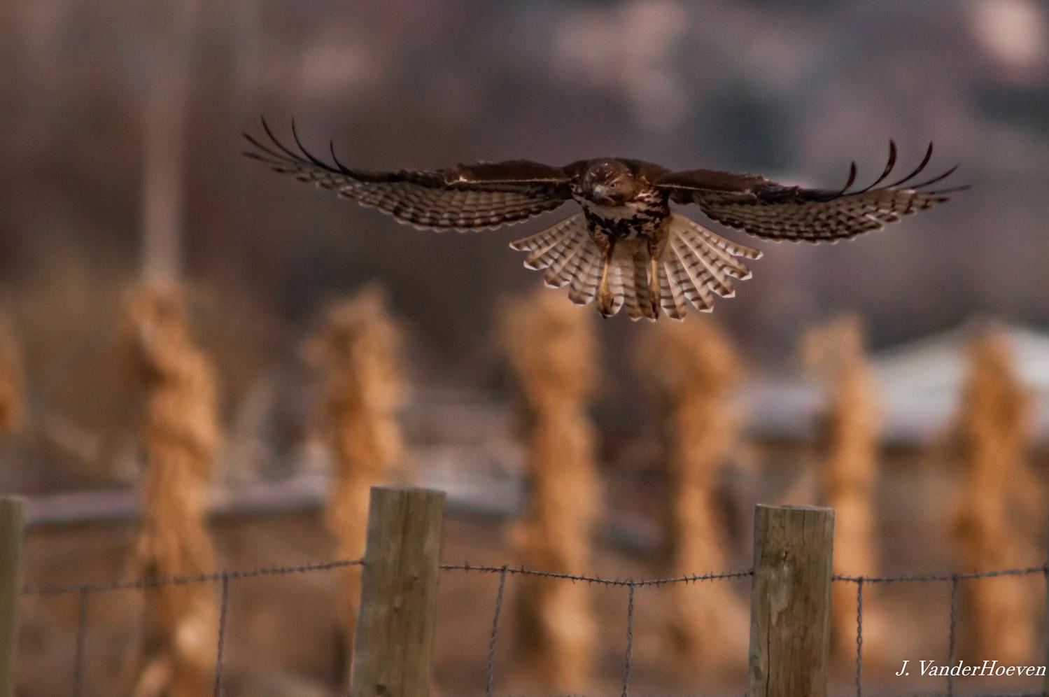 Fence Post Hopping by Jake VanderHoeven