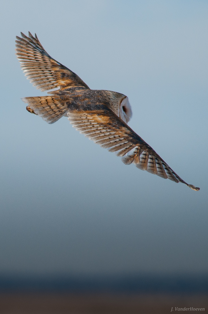 Sweep of a Barn Owl by Jake VanderHoeven