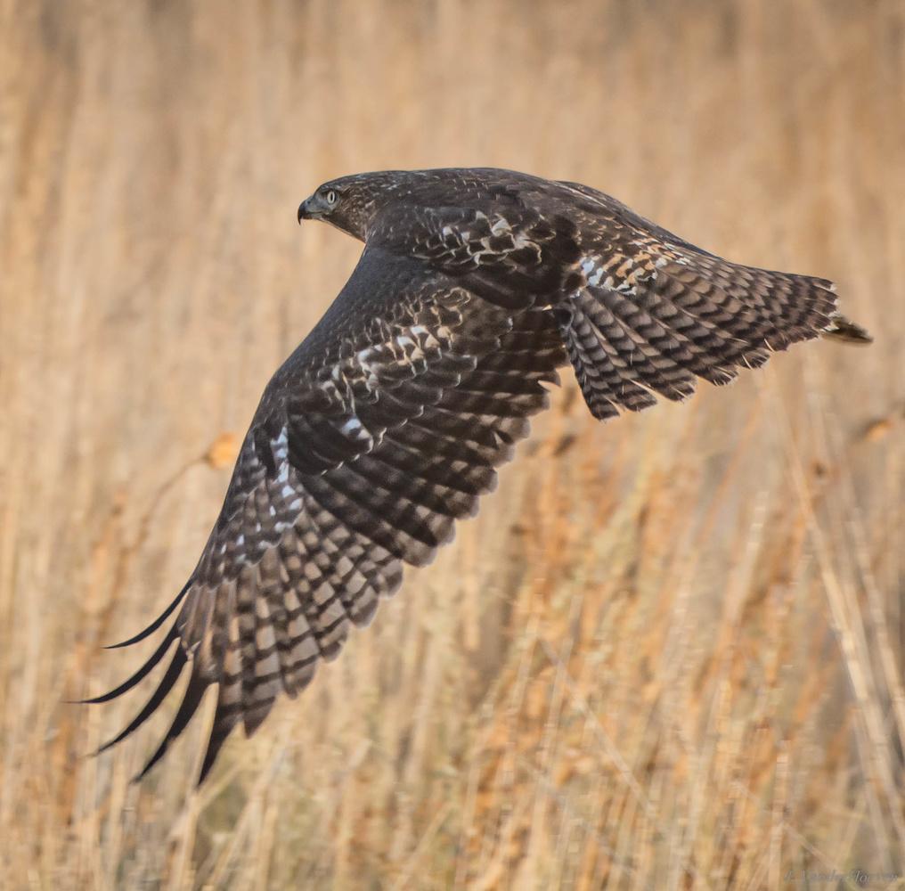 The Hunt by Jake VanderHoeven