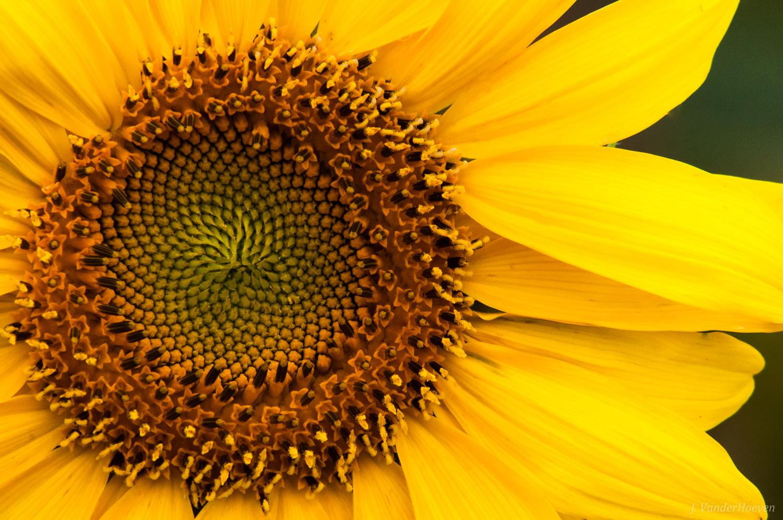 Good Day Sunshine! by Jake VanderHoeven