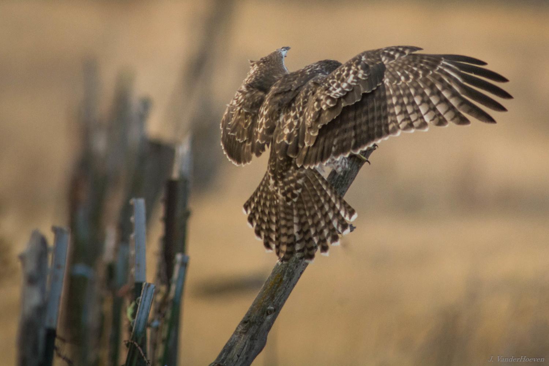 Fence Hopping by Jake VanderHoeven