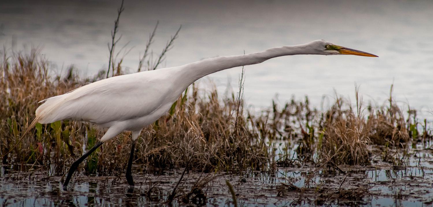 Stretch by Jake VanderHoeven