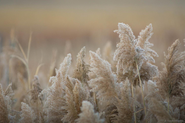 Soft Morning by Jake VanderHoeven