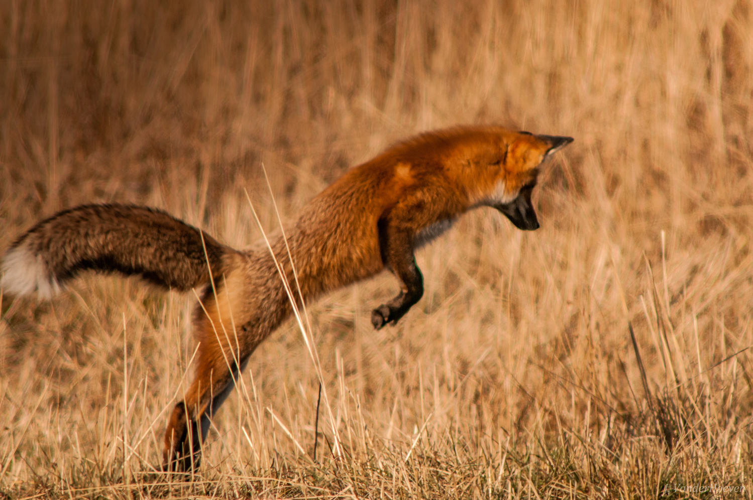 The Leap by Jake VanderHoeven