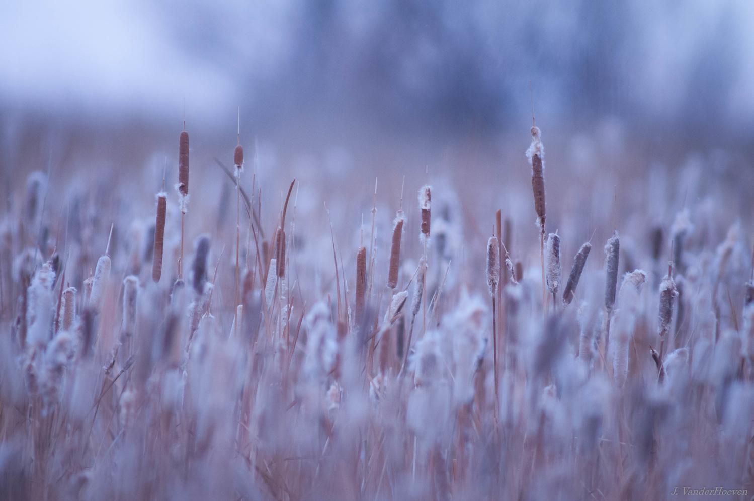 Morning Wetlands by Jake VanderHoeven