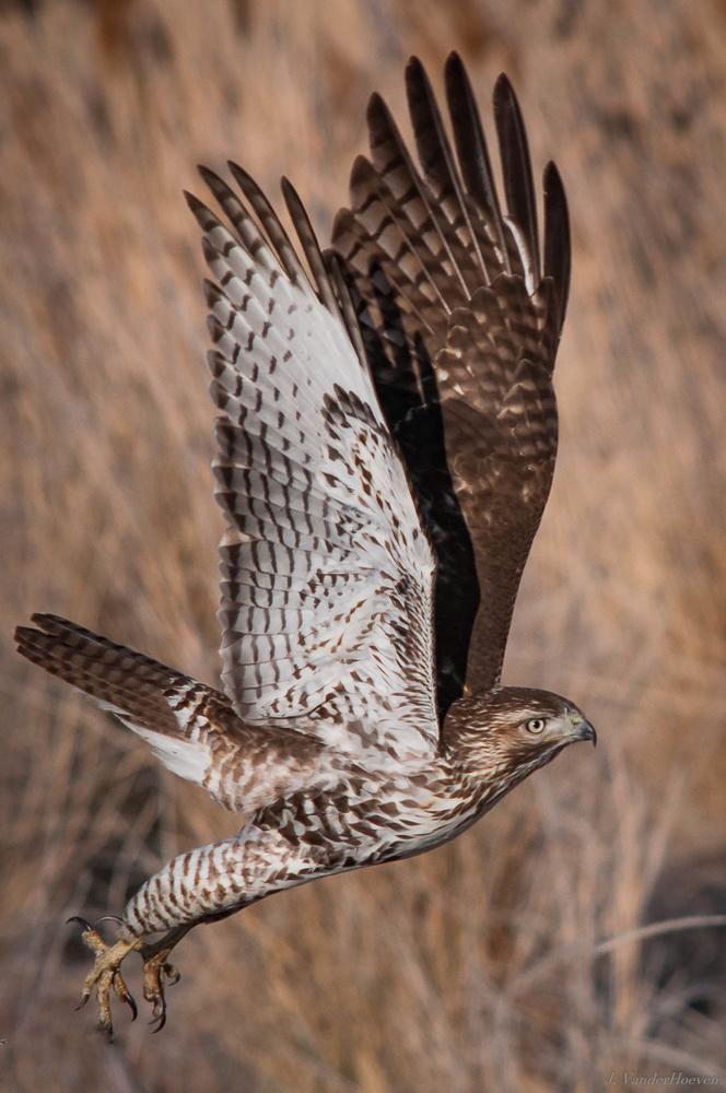 Coopers Flight by Jake VanderHoeven