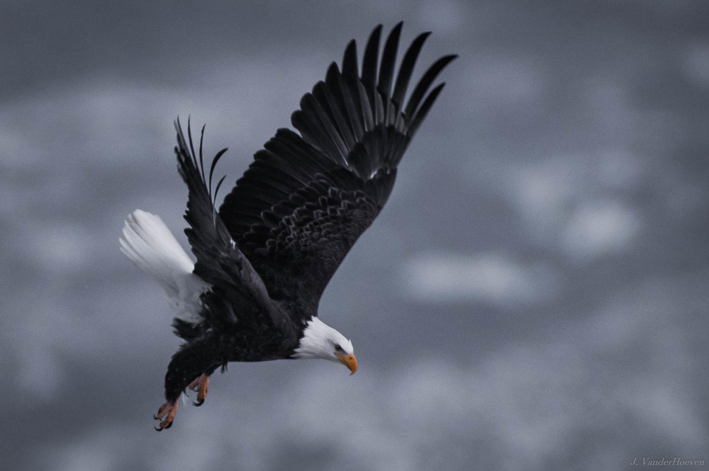 Eagle by Jake VanderHoeven