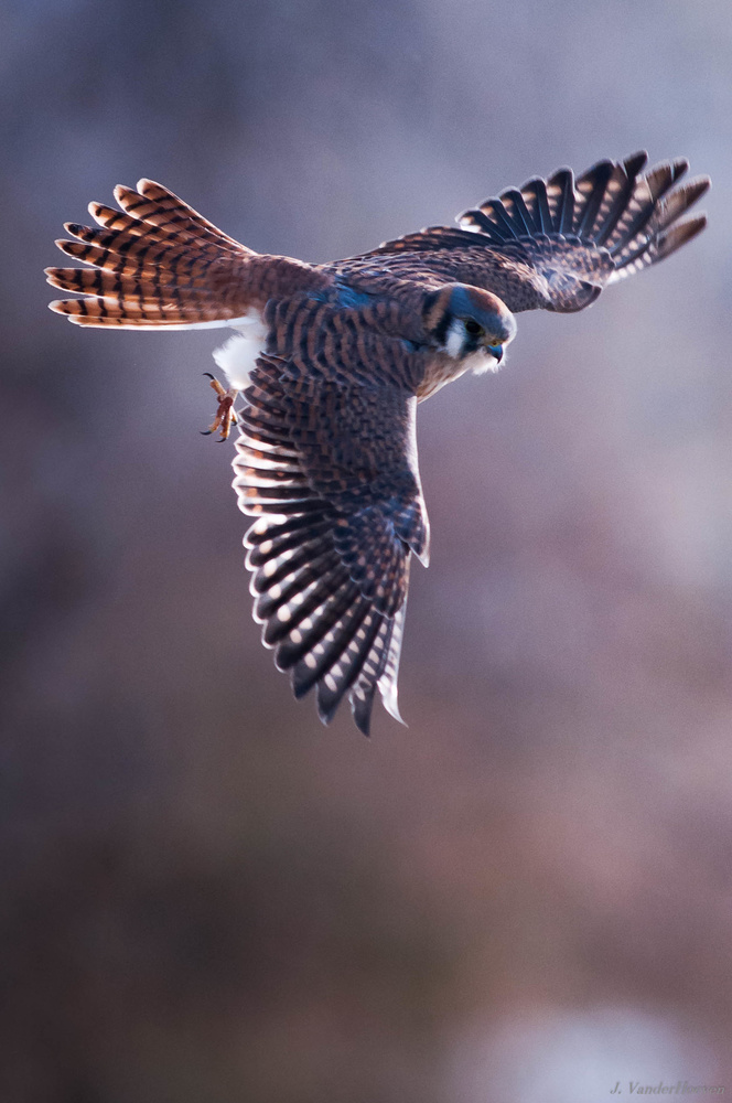 Backlight Flight by Jake VanderHoeven