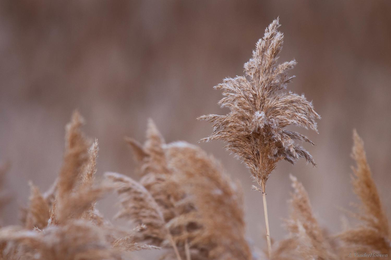 Wetland Grasses by Jake VanderHoeven