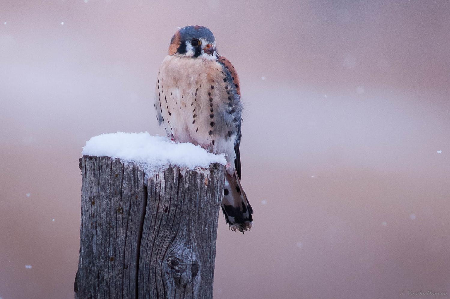 Seasons Greetings by Jake VanderHoeven