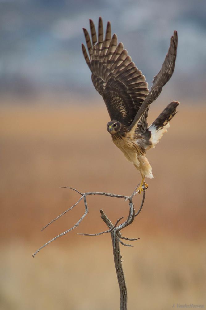 Wings! by Jake VanderHoeven