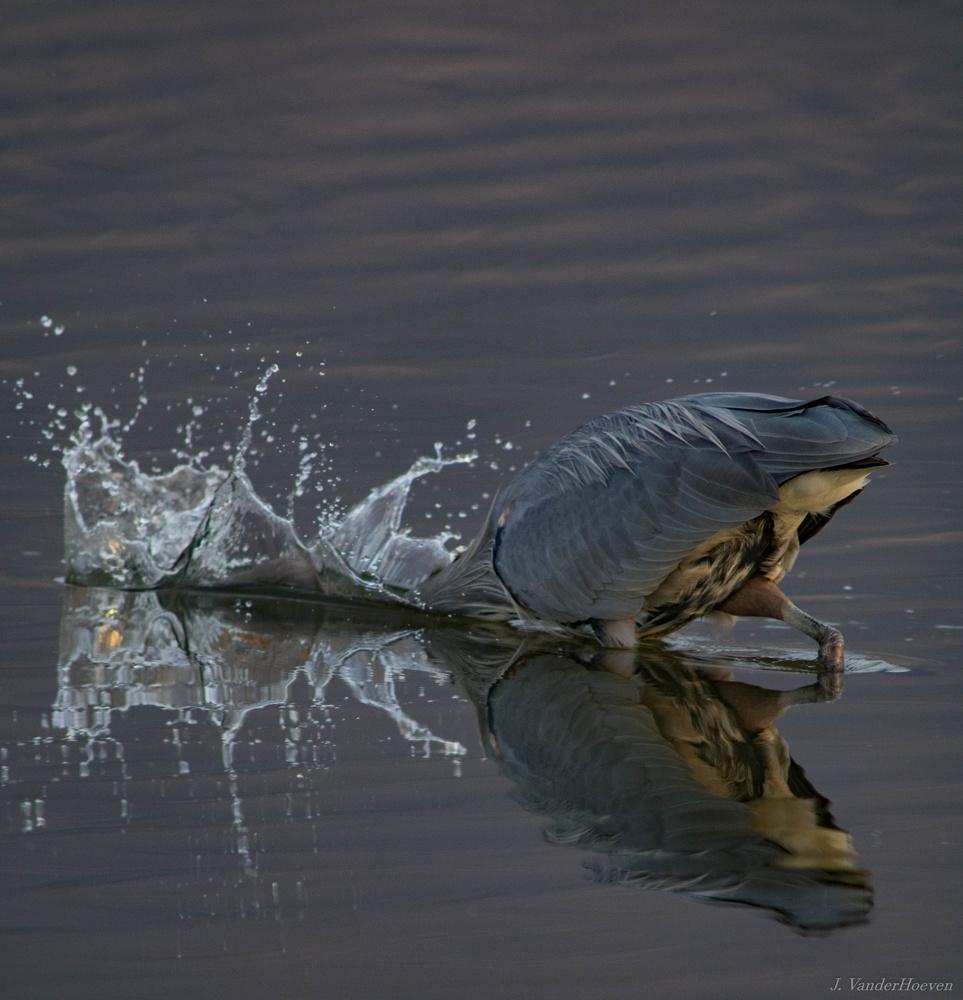 Bottoms Up! by Jake VanderHoeven