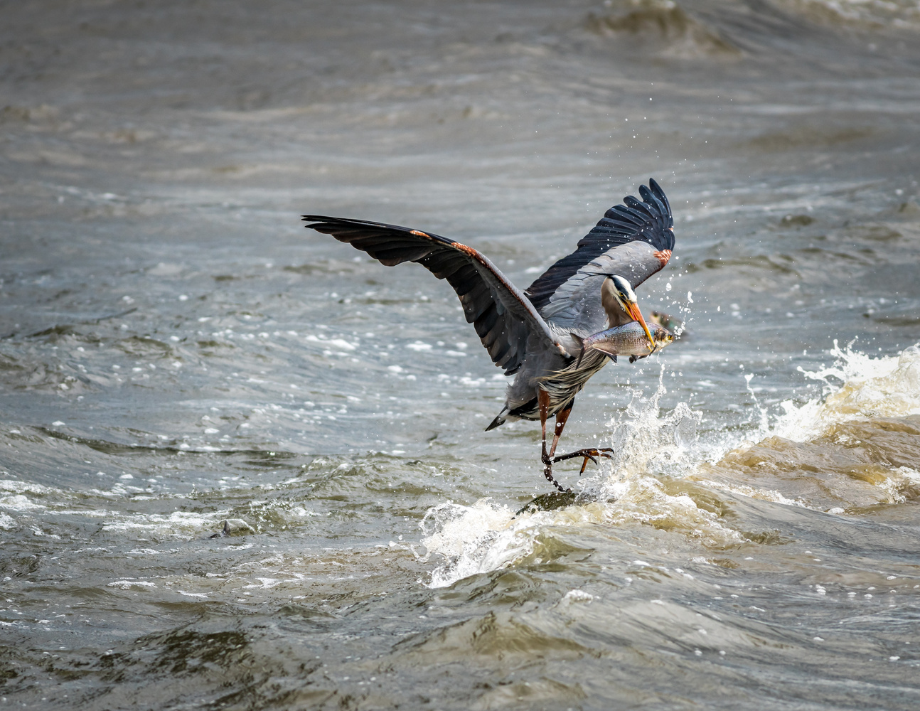 Stormy Fishing by Thomas Fiscella
