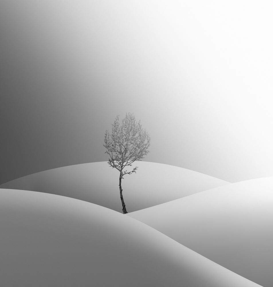 tree story by Amirhossein Naghian