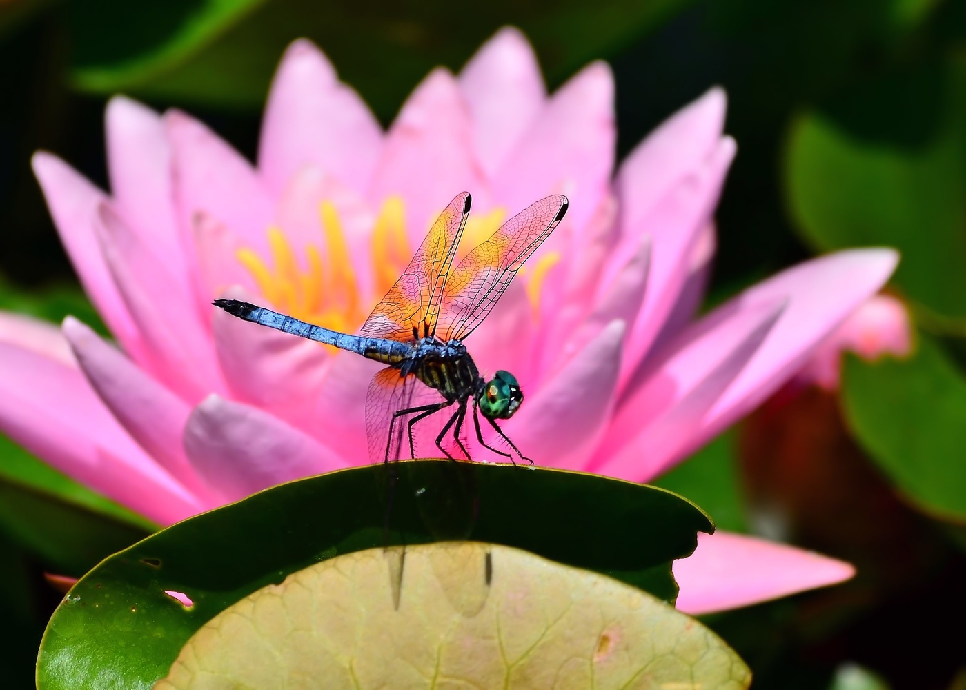 Dragonfly by Kenny Simpson