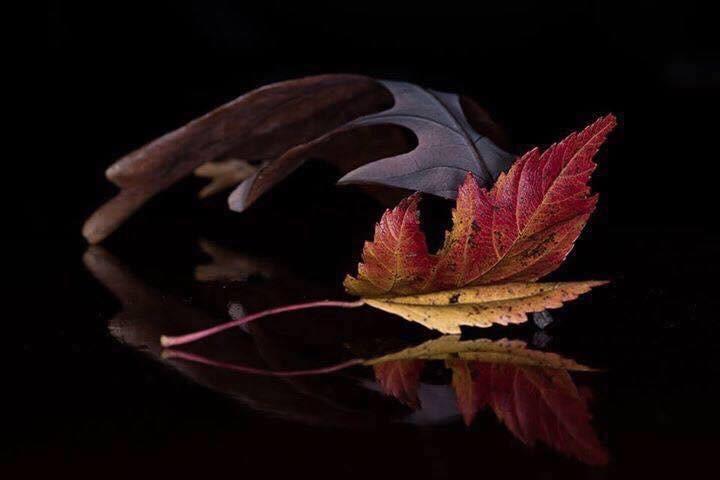Macro leaf by Tiffany Robb