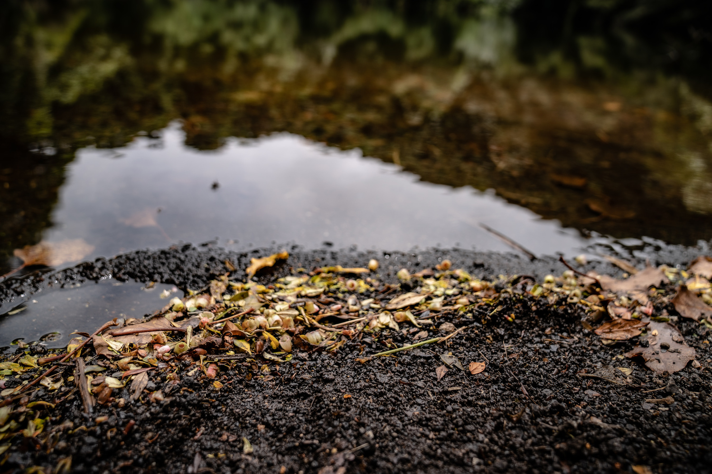 Laguna de Hule | Leaves Reflection by Sebastian Rodriguez