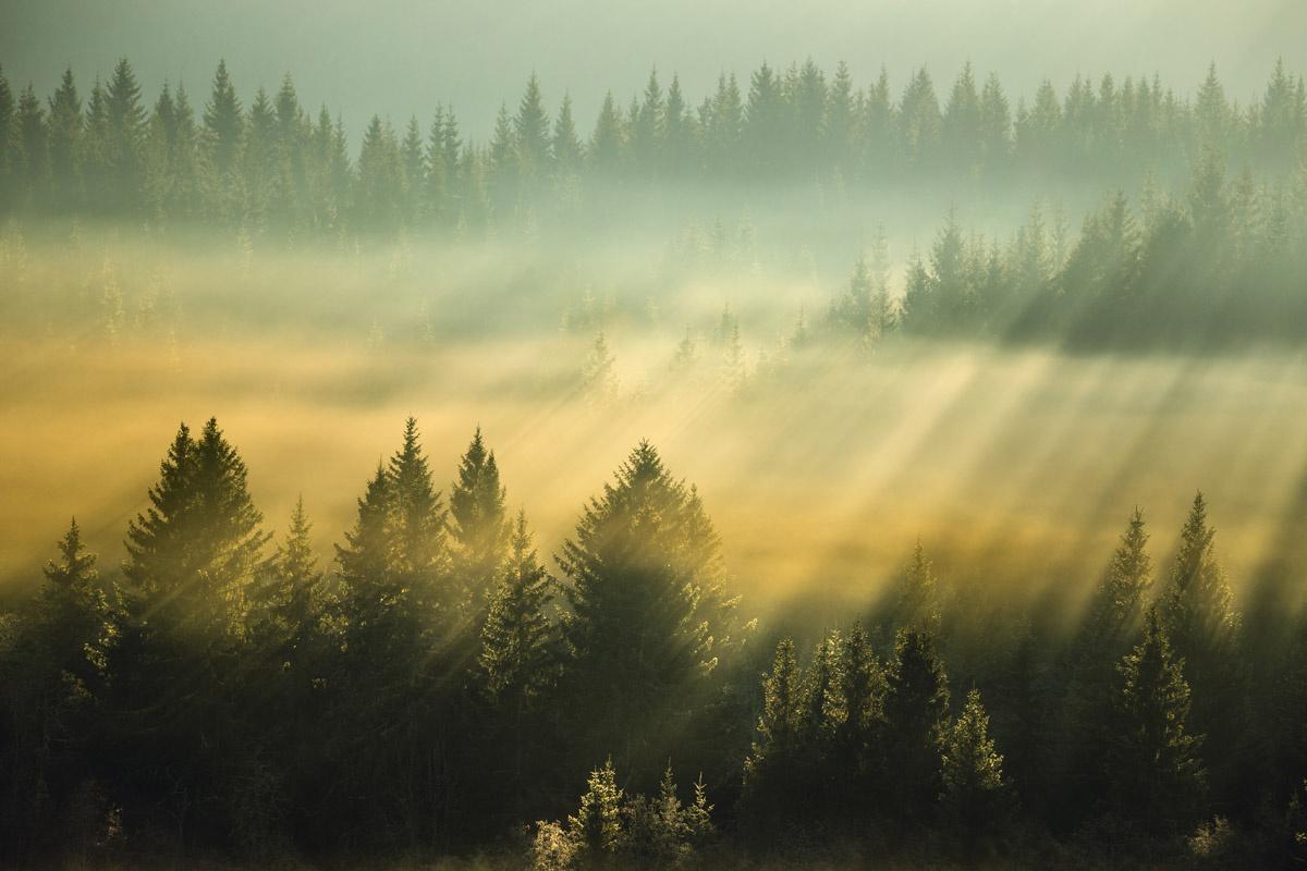 Misty light by Adrian Szatewicz