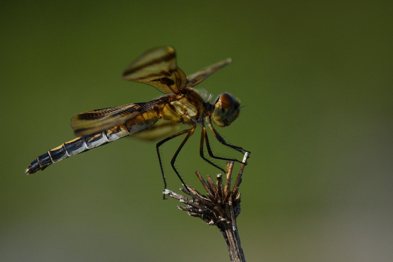 Dragonfly by Debb Briggs