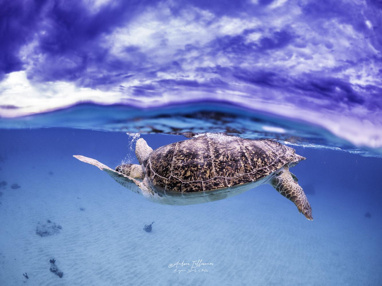Green Turtle by andrea Iallorenzi